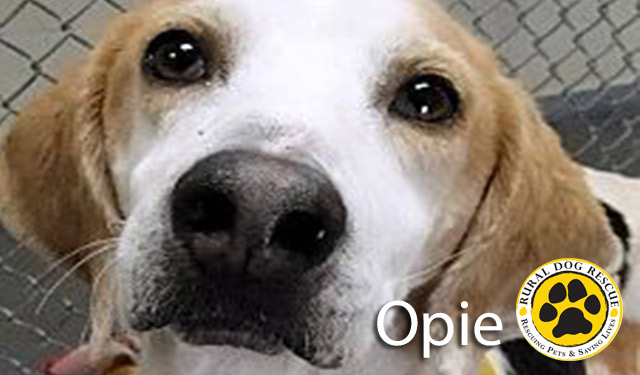 Opie - Rural Dog Rescue