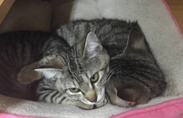 stolen_kittens