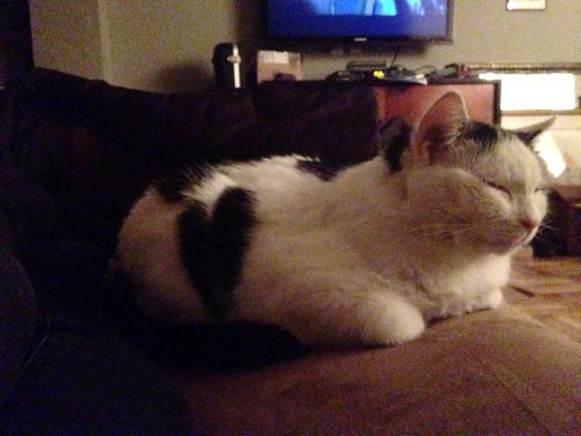 Bessie loaf