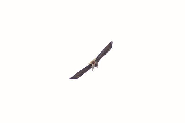 eagle_arboretum