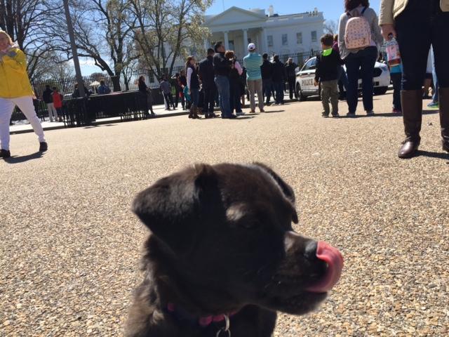 puppy_hit