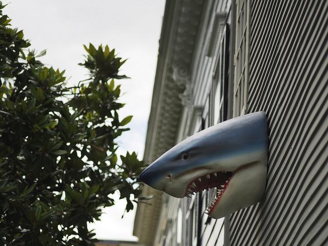 miki j shark