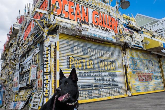 ocean city gallery