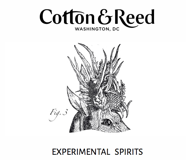 cotton reed