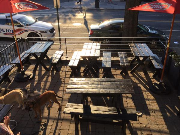 airedale patio open pups on patio