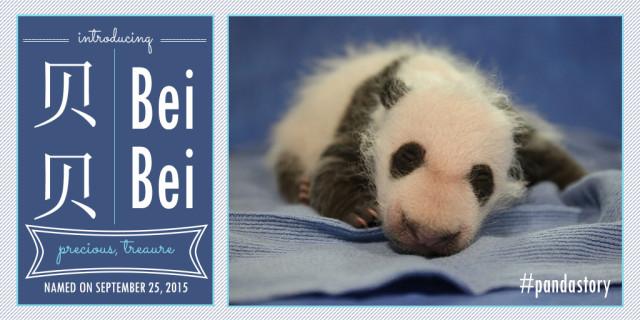 bei-bei-giant-panda