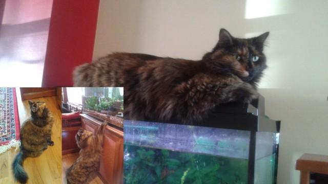 Delila's struggle with the aquarium
