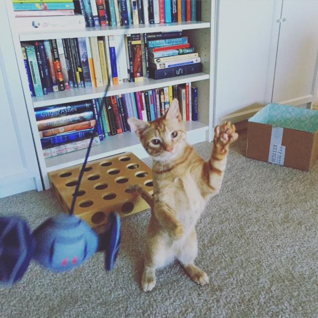 PoP Animal Fix - Oliver Queen