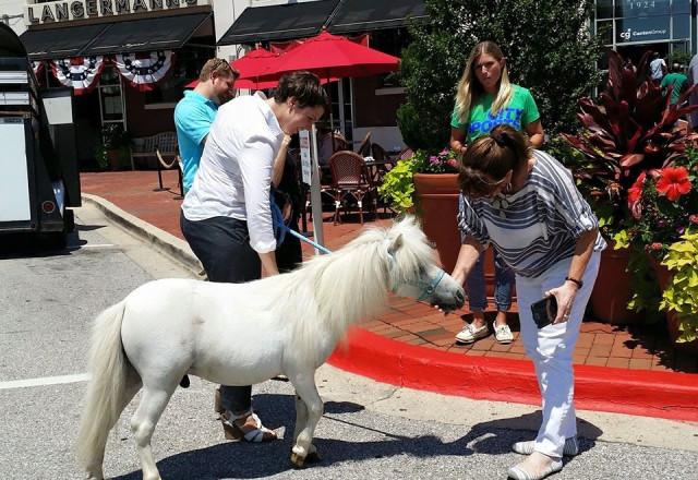 Pony Pic