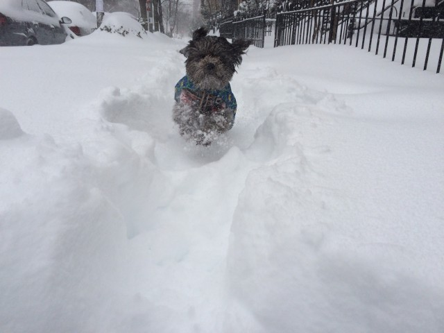 Sadie.Snow.1.23.16