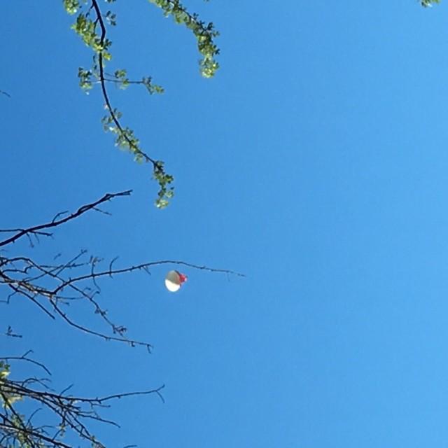 imaging balloon