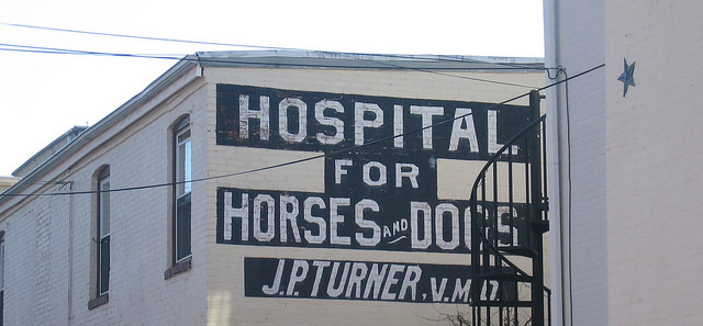 dog hospital