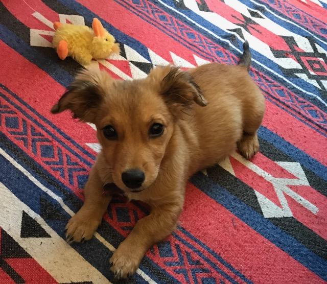 noma pup