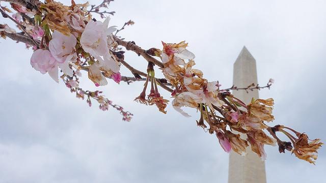blossoms freeze