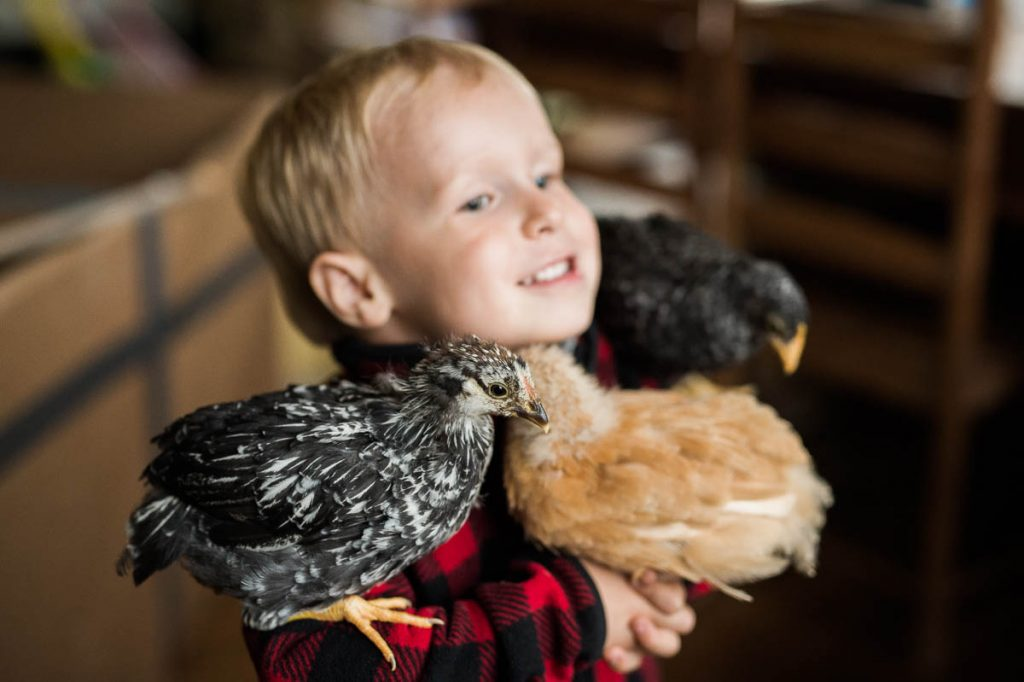 DC Chickens-5