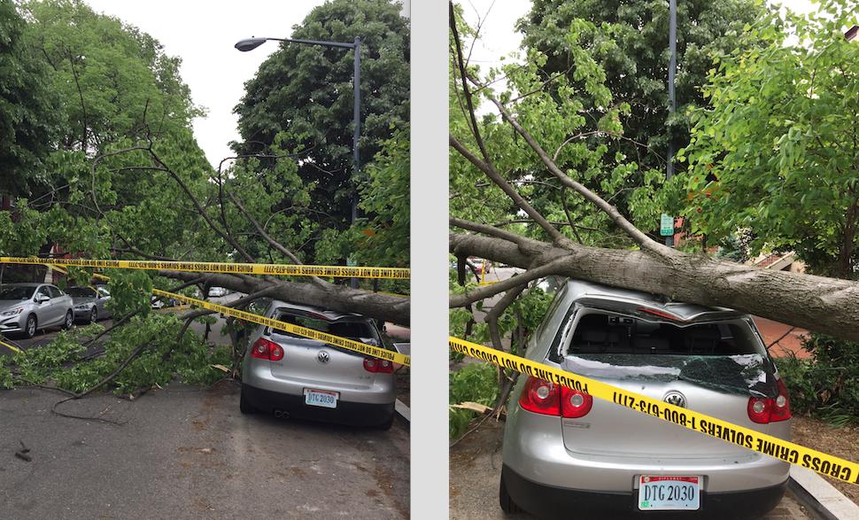 tree smash car
